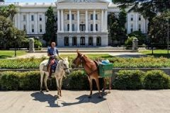 The Mules, Little Girl and Little Ethel, at Sacramento State Capitol