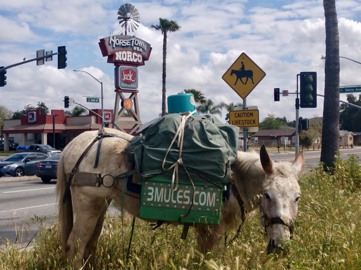 Norco – HorseTown USA