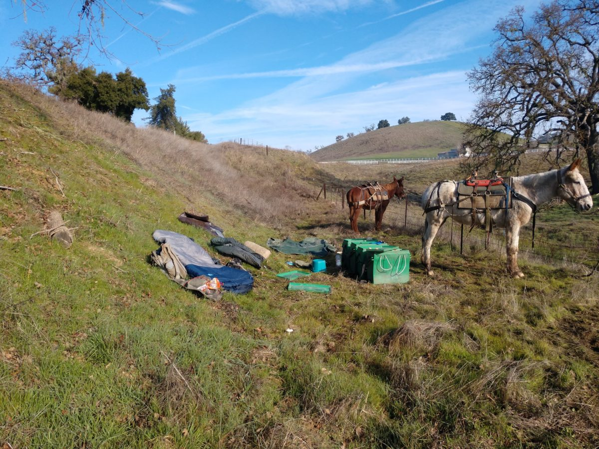 The Mules wrongful arrest by CHP outside Paso Robles and sent to jail and animal shelter in San Luis Obispo