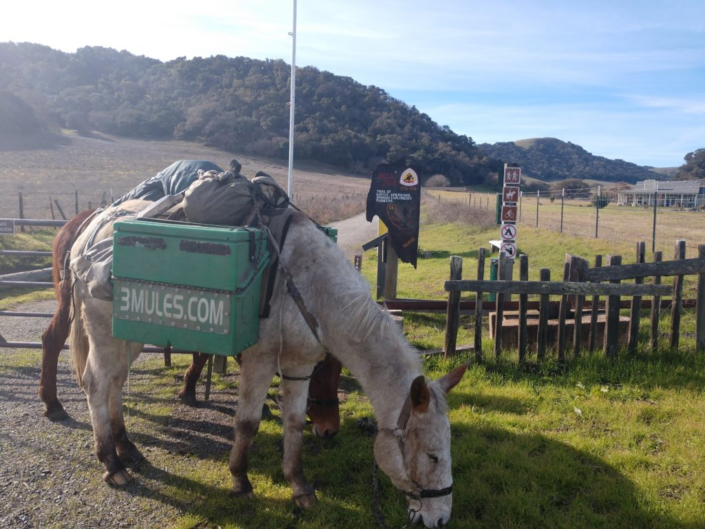 The Mules at Juan Bautista De Anza trailhead in San Juan Bautista