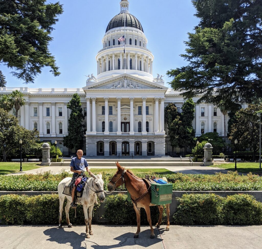The Mules in California State Capitol July 2020
