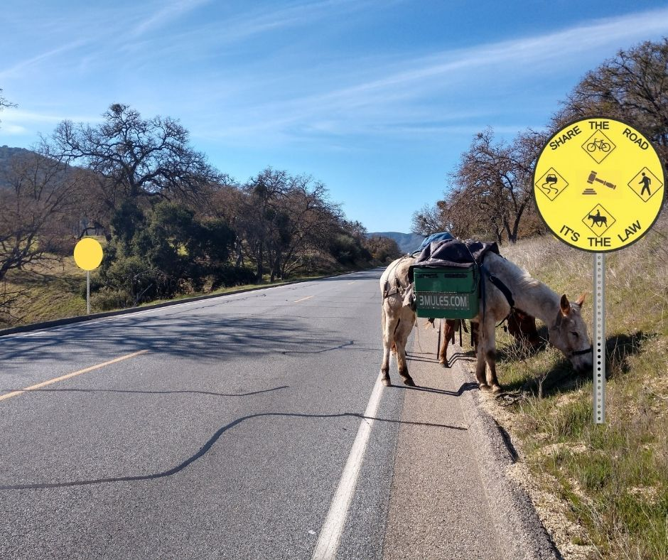 3/19 Lawsuit Update: Mules vs State of California and CHP